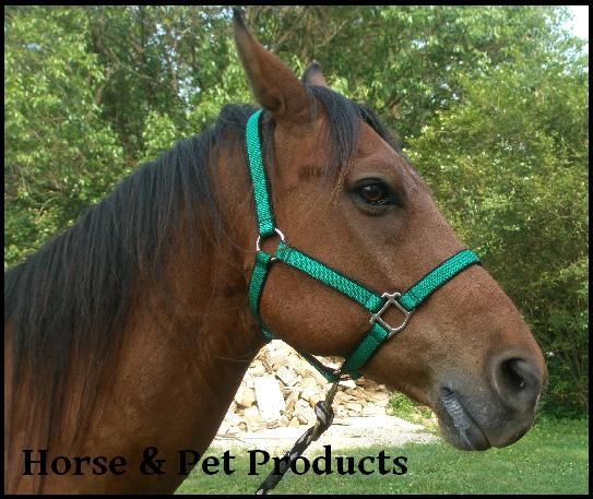 Horse and Pet Products